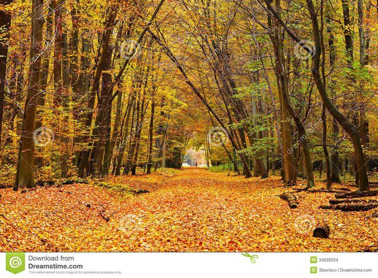 εικόνες φθινοπώρου - Αναζήτηση Google