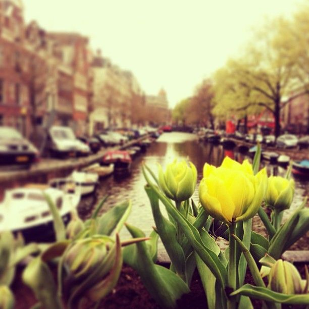 Amsterdam | Spring | iPhone photography