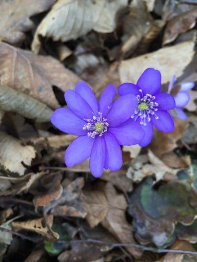 Frühlingserwachen im Wienerwald