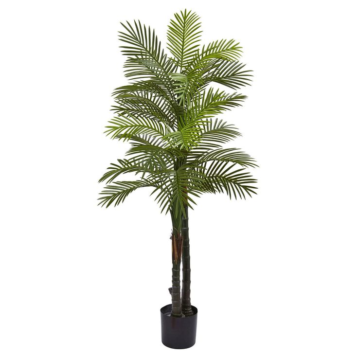 Double Robellini Palm Tree UV Resistant 5.5' - (Indoor/Outdoor) - Nearly Natural, Green