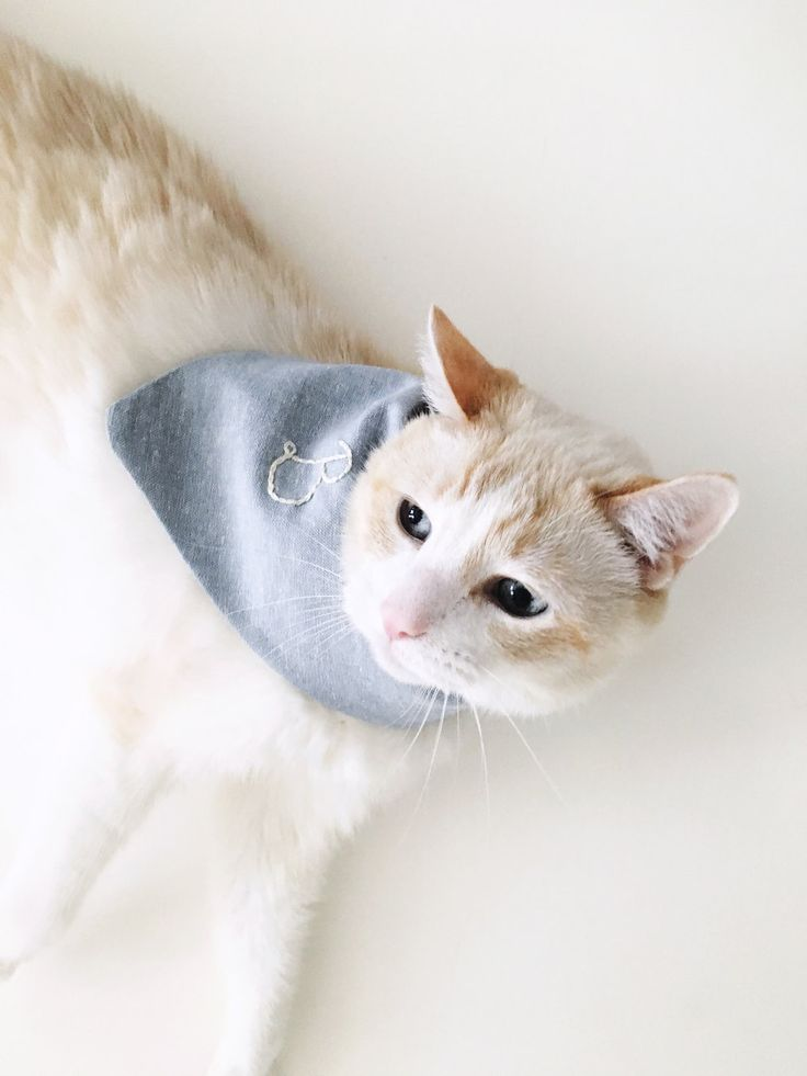 Cats and bandanas. If this brilliant combination has never occurred to you  before now, I dare you to tie a bandana around your cat's neck and tell me  they are not the cutest thing you've ever seen.I recently made this  discovery after putting my 3 month old daughter's banana bib on my cat  (b