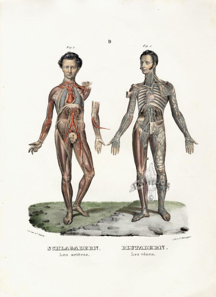 Contemporary History Of Human Anatomy Ornament - Anatomy And ...
