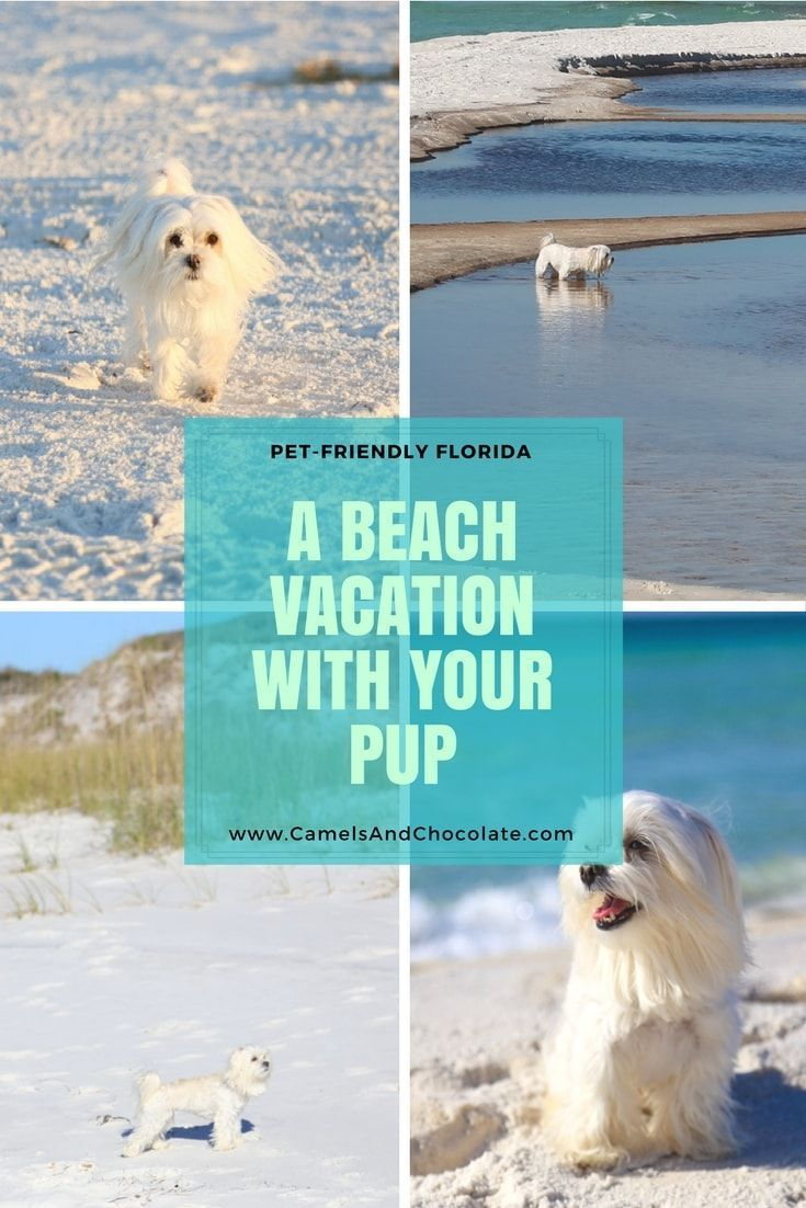 City Dog Goes To Florida A Gulf Coast Vacation Dog Friendly