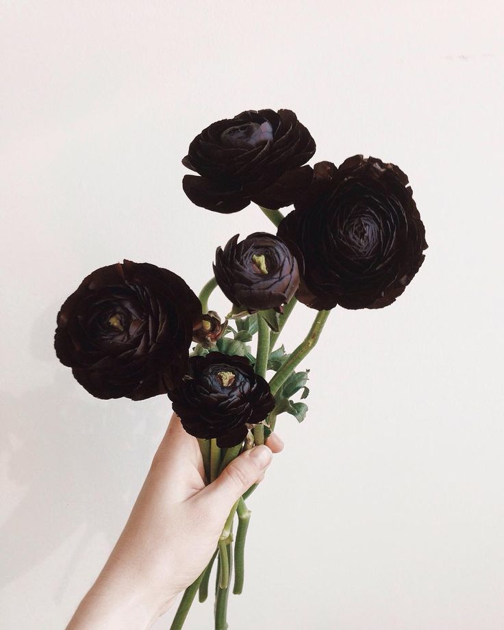 1000 Images About I Want Black Flowers On Pinterest: 25+ Best Ideas About Ranunculus On Pinterest