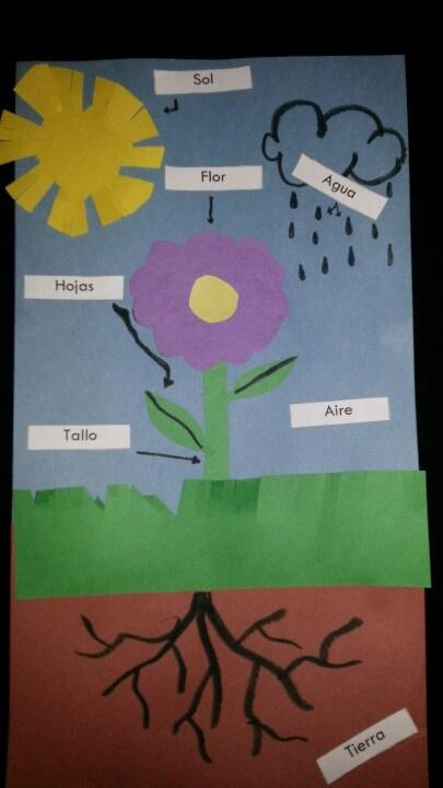 Las partes de la flor y lo que necesita para crecer