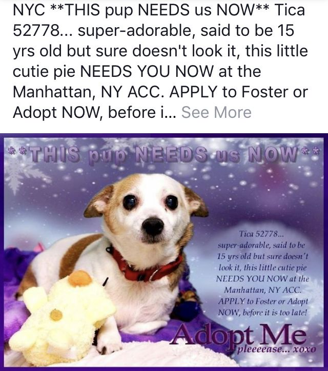 Nyc Super Senior Urgent In Nyc Ny Please Tica Needs Help Now Hurry Nyc Dogs Animal Shelter Fundraiser Pets Cats