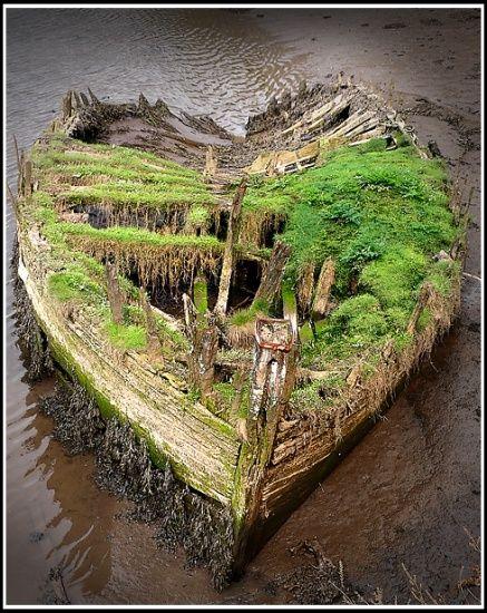 ~ Abandoned boat overcome by the wilderness #L'ArbreVert #B&B http://larbrevert.net/