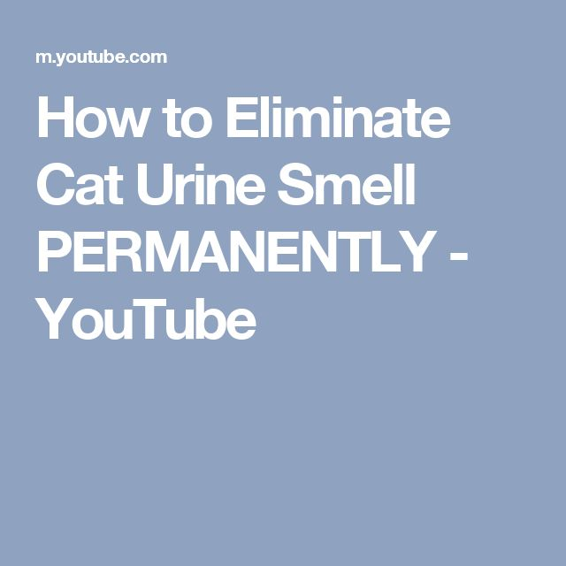 How to Eliminate Cat Urine Smell PERMANENTLY - YouTube