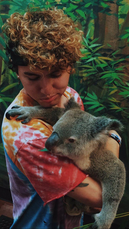 Jc Koala