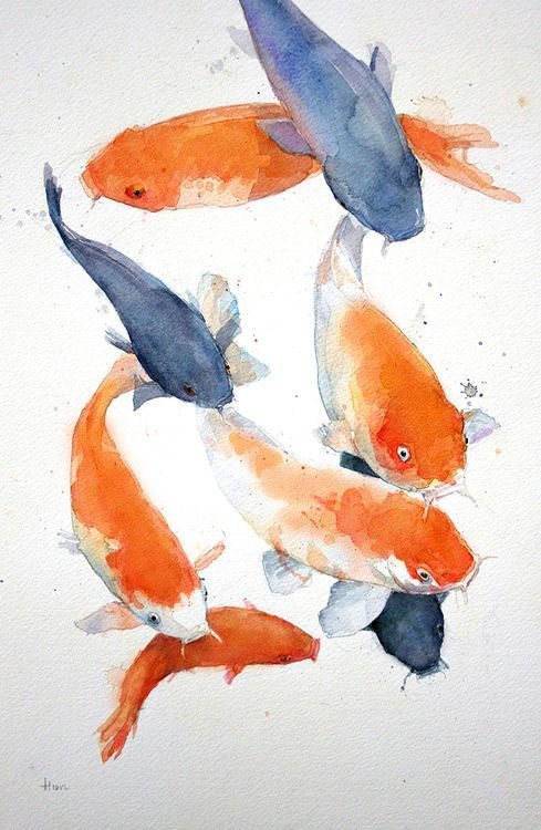 1000 images about orange and blue on pinterest autumn for Blue and orange koi fish