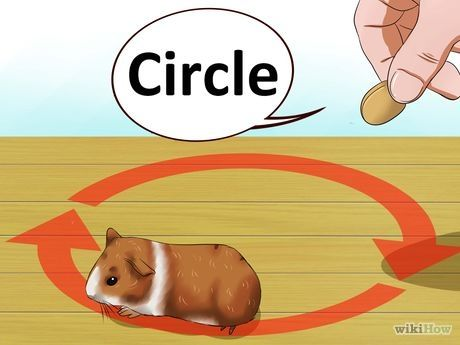 Image titled Train Your Guinea Pig Step 3