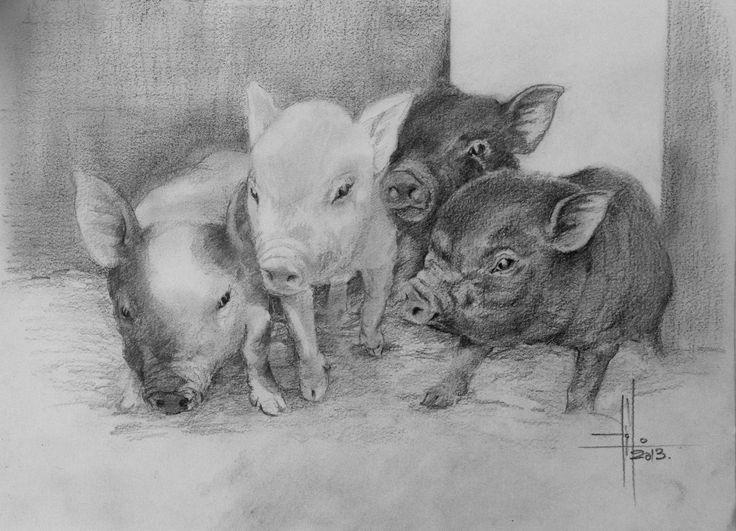 Dibujo lechones cerdo a Grafito sobre Canson