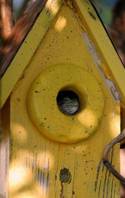 Yellow BlissBeautiful Birdhouses, Birds Gardens, Mellow Yellow, Fashion Yellow, Awesome Birdhouses, Yellow Birdhouses, Birdie House, Birdhouses Feeders Bath Oh, Yellow Birds House