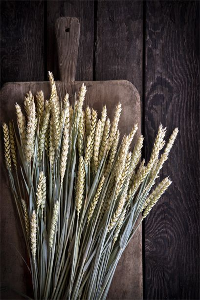 Wheat. Food photography and food styling by weshootfood.net #food #photography #foodstyling #foodphotography #dubai