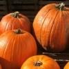 Favorite Apple & Pumpkin Picking Spots in NY & NJ