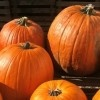 Favorite Apple & Pumpkin Picking Spots in NY & NJ