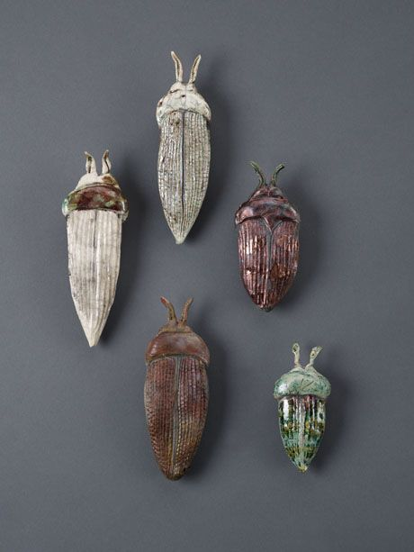 Beetles Art Holly De Saillan Google Search Beetles In