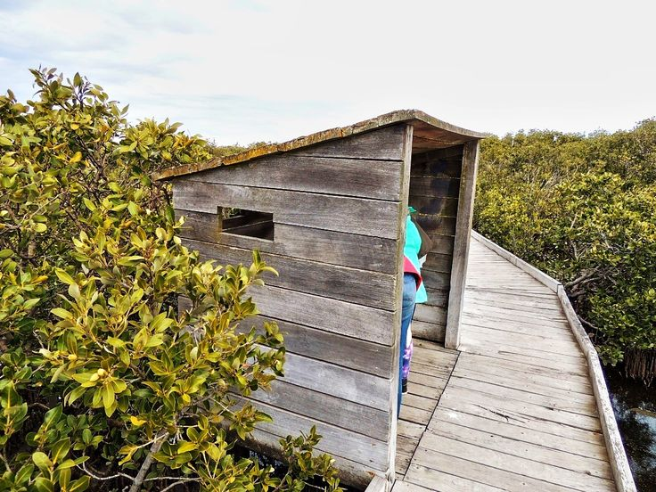 st kilda, st kilda mangrove trail, st kilda playground, mangrove, mangrove swamp, st kilda adventure playground, in adelaide, kids in adelaide, city of salisbury, bird hides