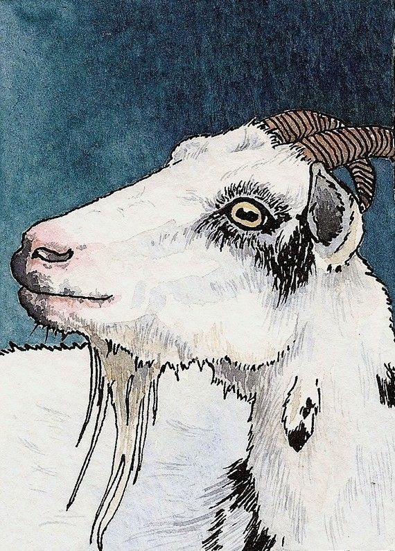 SPECIAL OFFER goat collection by daniellebarlowart on Etsy, £21.00