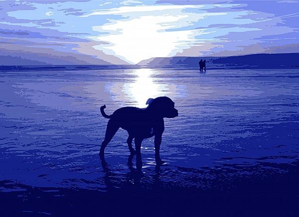 Staffordshire Bull Terrier on Beach