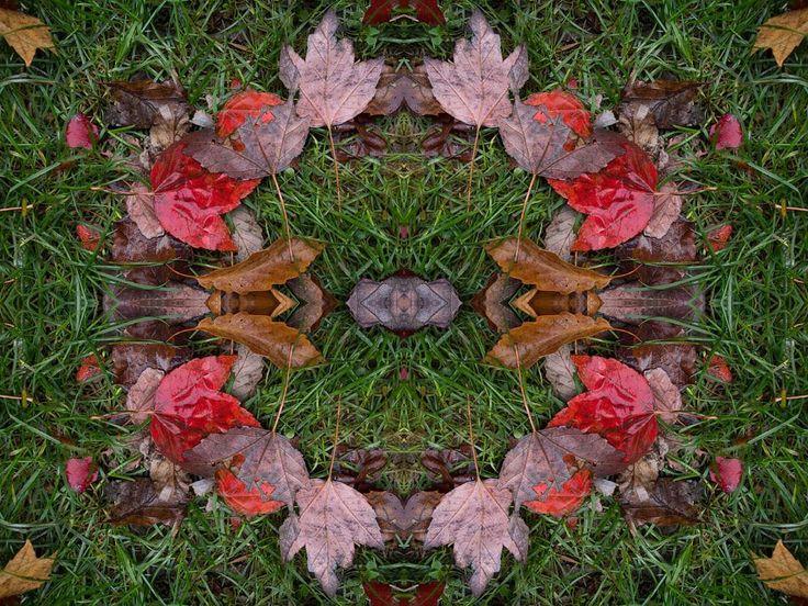 Meditations on Reflections #thornappledreams #thornappleproductions #thornapple #mikeroutliffe #reflections #myth #neomythic #entheogenic #composite #fractals #mandala#speculativefiction #cyberpunk #futuristic #futurism #avantegarde #contemporaryart #digitalarts  #graphics #biomech #newmediaart #newmediaartists #cyberbetics #artaesthetics #concept #leaves #multimedia #transmedia