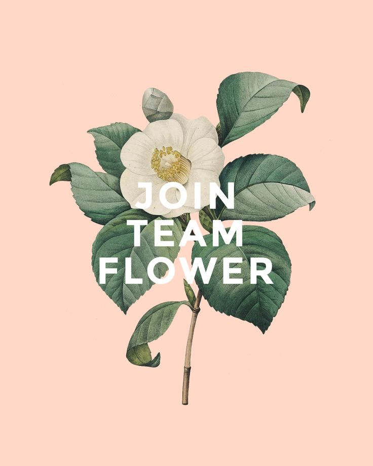 I'm a Team Flower member and I'm inviting you to join their online classes! Follow this link and save $25 when you join.