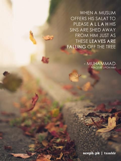 """When a Muslim offers his salat to please Allah his sins are shed away from him just as these leaves are falling off the tree."" -Prophet Muhammad (SAAWA). SubhanAllah, Islam is beautiful... Alhamdulillah"