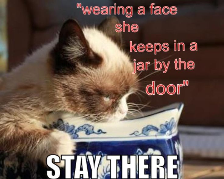 Funny Christmas Memes For Friends : 132 best grumpy cat images on pinterest cats grumpy cat and kitty