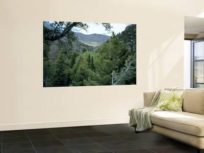 Mountain Mahagony & Conifers in Canyon of Goshute Creek, Goshute Canyon Wilderness, Nevada, USA Wall Mural by Scott T. Smith at AllPosters.com