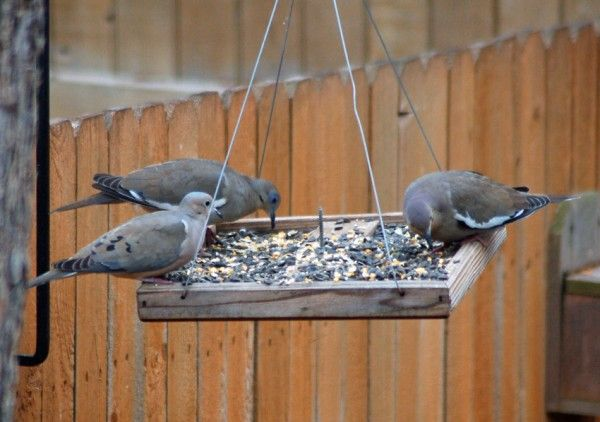 how to build a feeding platform for mourning doves