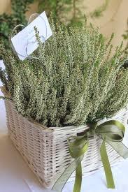 aromatic herbs basket