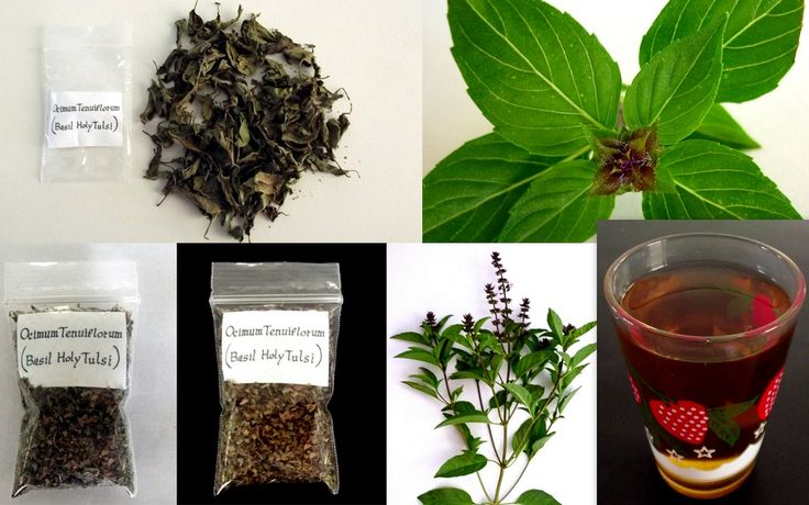 Dried Tulsi Herb Holy Basil Ocimum Tenuiflorum
