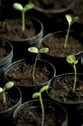 Science Fair: The Effect Of Acid Rain On Seedling Germination