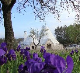 Beautiful hilltop Trulli w/POOL, set in almond and olive groveVacation Rental in Ostuni from @HomeAway! #vacation #rental #travel #homeaway