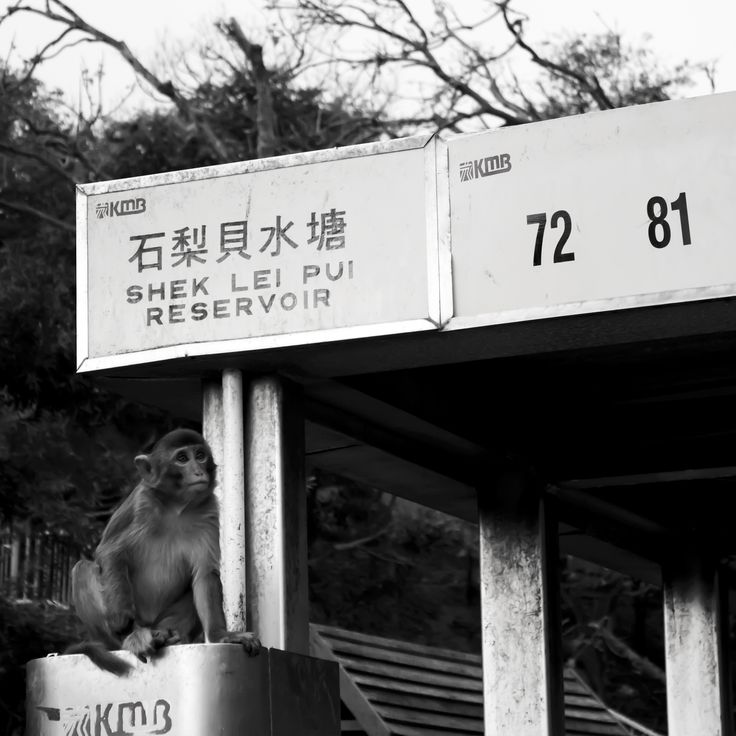 """Planet of the Apes"" Shot in Hong Kong by Beren Davis"