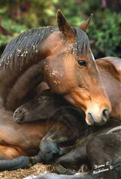 Mama and baby: Beautiful Horses, Sweet, Mothers, Baby, Mom, Newborn, Animal, Foal