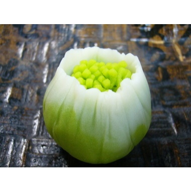 ふきのとう Fuki no tou - Butterbur sprout