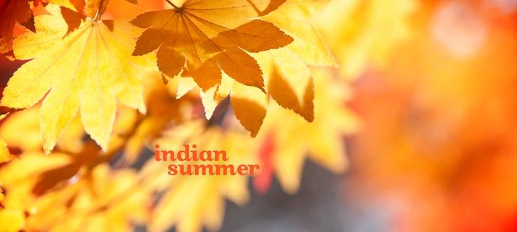 Indian Summer by DavidsTea