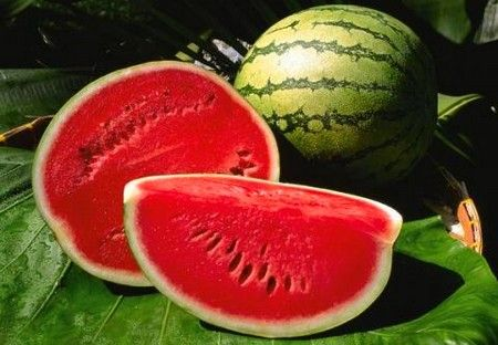 Watermelons are a new export product from Greece, for the PERNANTO limited, from 2014.  Watermelons varieties are Crisby, Samantha, Crimson tide, Obla etc. Its main markets are Italy and Romania.