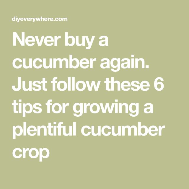 Never Buy A Cucumber Again Just Follow These 6 Tips For Growing A Plentiful Cucumber Crop In 2020 Tips Growing Cucumber Varieties