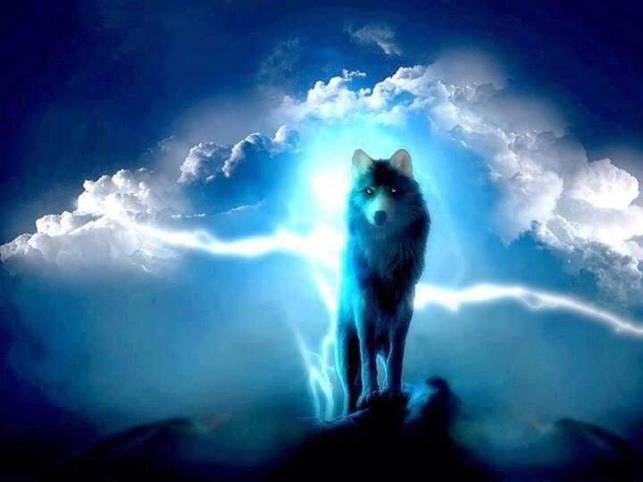 Blue Lightning Ak Snow Wolf Pinterest Wolves