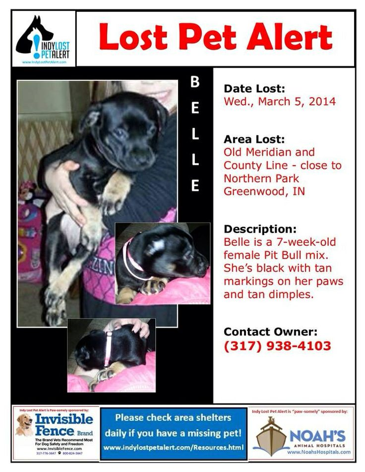 #LOSTDOG 3-5-14 #GREENWOOD #IN 7 WEEK OLD FEMALE #PITBULL MIX OLD MERIDIAN & COUNTY LINE #NORTHERNPARK BLACK WITH TAN MARKINGS ON PAWS AND TAN DIMPLES 317-938-4103