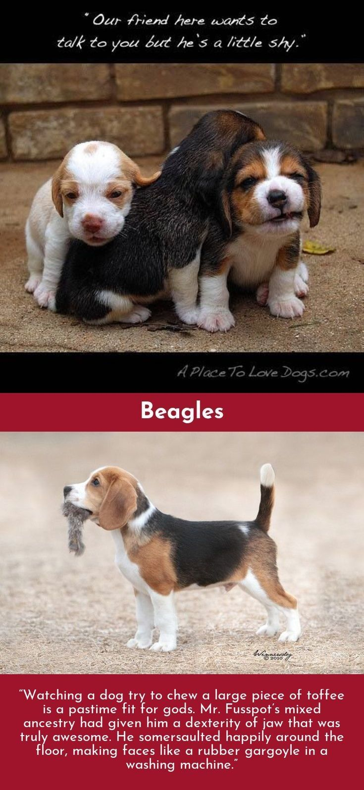 When I Needed A Hand I Found Your Paw Beagles Beaglefun