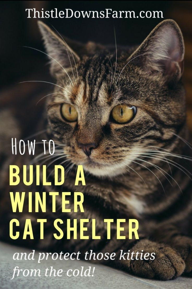 How To Build A Winter Cat Shelter In 5 Easy Steps In 2020 Cat Shelter Cat Shelters For Winter Winter Cat