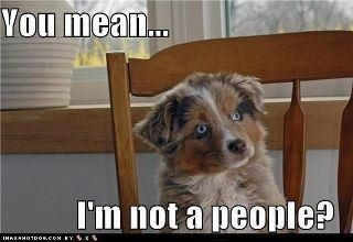 I think my dog thinks she is a people!: Doggie, Cat, Dogs, Aussies, Pet, So True, Funny Animal, Australian Shepherd, People