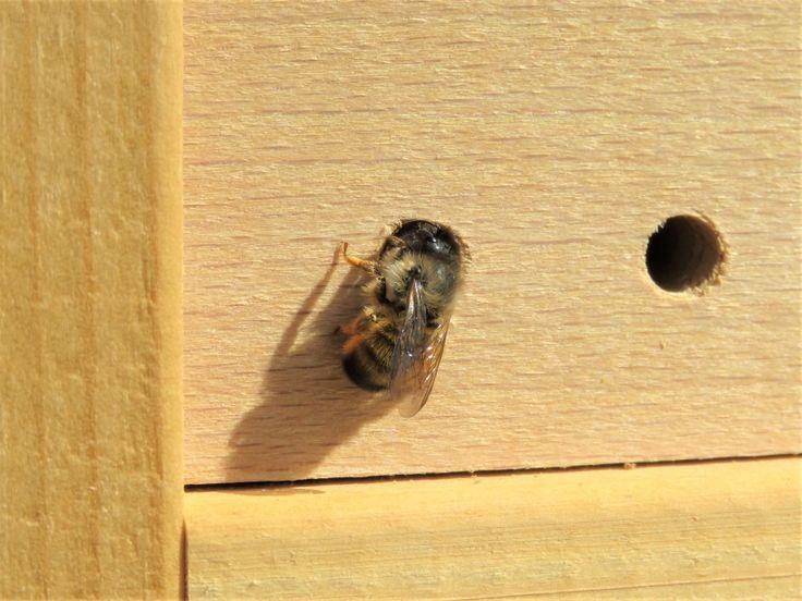 Pin Auf Insekten