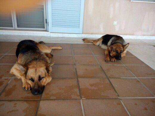 Max and Ira...