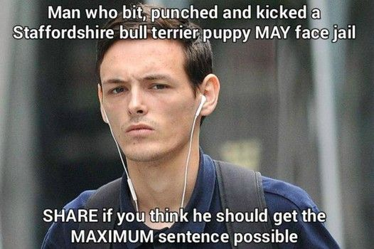 Manchester animal abuser who bit and kicked puppy banned from owning pets