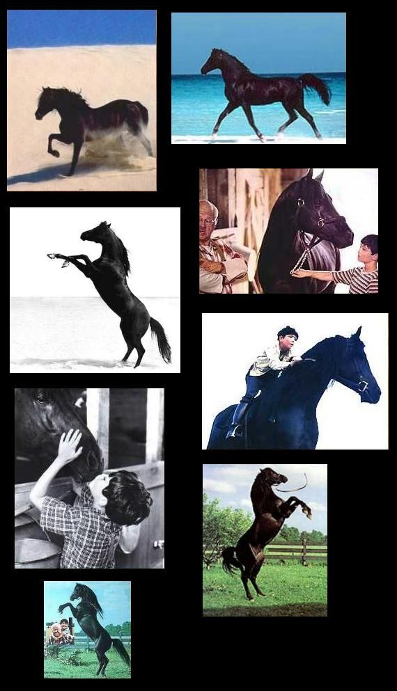 Cass Ole, The Black Stallion