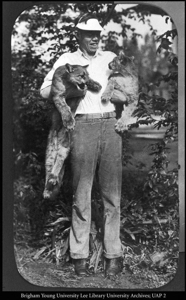 The cougar was chosen as the BYU mascot in 1923, upon the suggestion of Coach Eugene L. Roberts, who had previously used the name to describe his athletes in newspaper articles. Dave Rust, an alumnus of BYU and a guide on the Colorado River, wired Roberts that a mother cougar and three kittens had been captured. Two of the kittens were brought to Provo and kept as mascots. Courtesy BYU